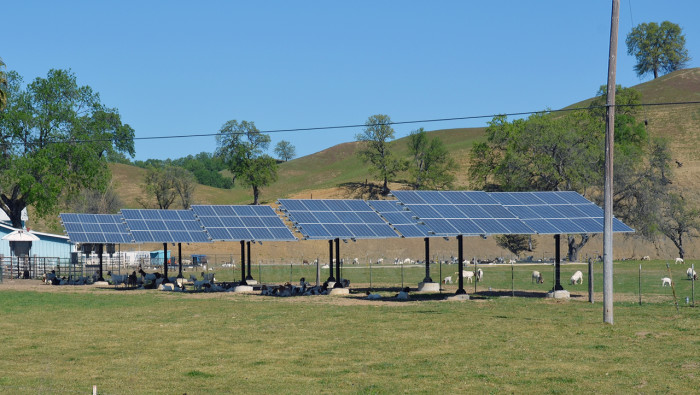 Solar goats 1