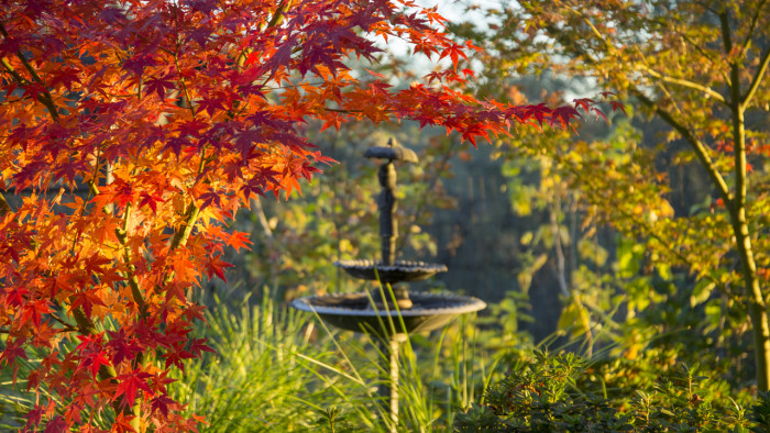 Red Maple fountain