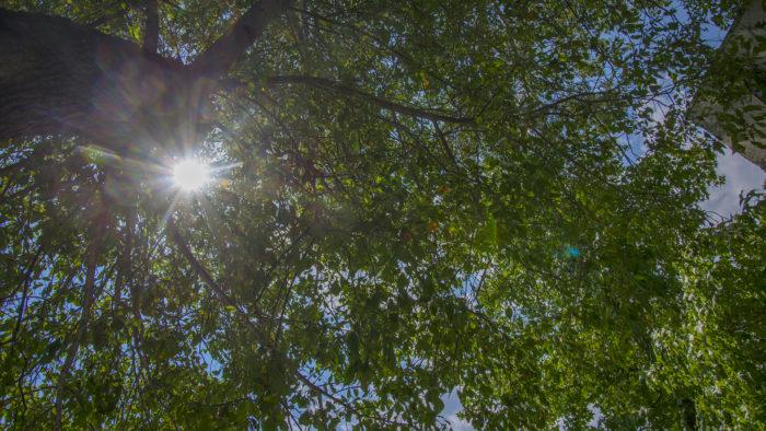 Bistro 107 trees2